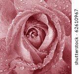 Pink Romantic Dewy Rose