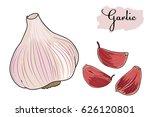 garlic. the slices of garlic. | Shutterstock .eps vector #626120801