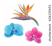 tropical flowers drawn of... | Shutterstock . vector #626135651