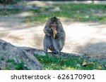macaque living in national park ... | Shutterstock . vector #626170901