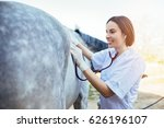 Stock photo veterinarian examining horse selective focus on vet s hand 626196107