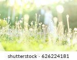 grass with sunlight. | Shutterstock . vector #626224181
