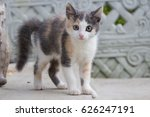 portrait of a cute kitten. grey ... | Shutterstock . vector #626247191