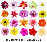 assortment blooms in america | Shutterstock . vector #62626321