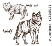 gray wolf  timber wolf or... | Shutterstock .eps vector #626265131