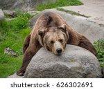 eurasian brown bear  ursus... | Shutterstock . vector #626302691