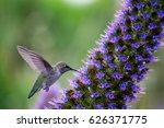 a hummingbird | Shutterstock . vector #626371775