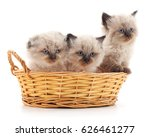 Small Kittens In A Basket...