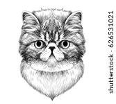 cat breed exotic shorthair face ... | Shutterstock .eps vector #626531021