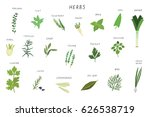 herbs spices green vector... | Shutterstock .eps vector #626538719