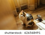 Ginger Three Color Cat Is Read...