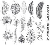 palm leaves set. vector... | Shutterstock .eps vector #626600465