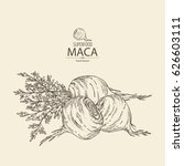 background with maca peruvian.... | Shutterstock .eps vector #626603111