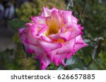 gloriously   magnificent...   Shutterstock . vector #626657885