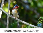 banded kingfisher perching on a ... | Shutterstock . vector #626660249