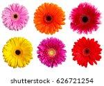 gerbera flowers isolated on... | Shutterstock . vector #626721254