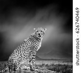 dramatic black and white image... | Shutterstock . vector #626740469
