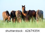 A Herd Of Belorussian Harness...