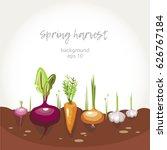 harvest vegetables garden bed... | Shutterstock .eps vector #626767184