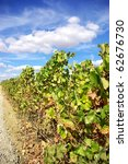 Vine with ripe grapes in the region of the Alentejo, Portugal. - stock photo