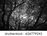 Scary Scene In Forest  Tree In...