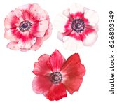 watercolor anemone flowers set. ... | Shutterstock . vector #626803349