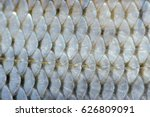 Real Roach Fish Scales...