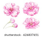 Stock photo spring colection of sakura bud flowers blossom pink flowers set watercolor botanical illustration 626837651