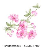 cherry flowers blooming bouquet.... | Shutterstock . vector #626837789