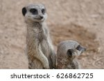 Peak Wildlife Park   Meerkat...