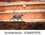 mother with baby   gray langur  ... | Shutterstock . vector #626893559