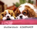 Dog Breed Cavalier King Charls...
