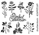 herbal collection. flowers ... | Shutterstock .eps vector #626905169