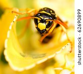 Clos Up Photo Of A Wasp In A...