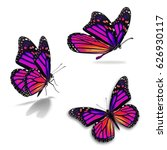 Stock photo beautiful three monarch butterfly isolated on white background 626930117