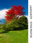 autumn and glowing red maple   Shutterstock . vector #62693497