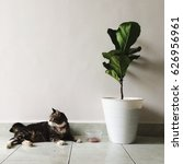Loving Cat With A Plant In...