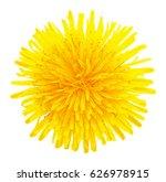 Blossoming Dandelion Yellow...