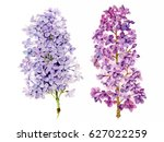 watercolor hand painted lilac... | Shutterstock . vector #627022259