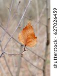 Small photo of Last year's dry leaf on spring branches.