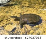 snapping turtle in the waterfall | Shutterstock . vector #627037085