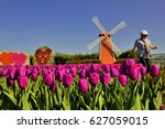 windmill around tulips at... | Shutterstock . vector #627059015
