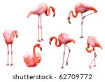 Set of red flamingo isolated on ...