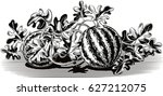 watermelon plant with some...   Shutterstock .eps vector #627212075