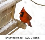 Small Red Cardinal Sitting On...