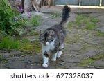 beautiful cat | Shutterstock . vector #627328037