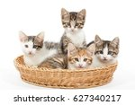 Group Of Young Kittens In The...