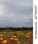 Pumpkin Field  With Dark Cloud...