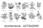 medical herbs and plants big... | Shutterstock .eps vector #627362009