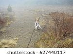 dog runs outdoors in mountain... | Shutterstock . vector #627440117